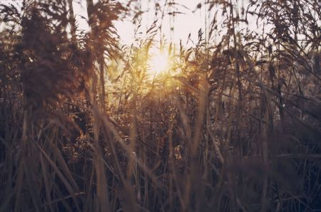 Sunlight through grass thicket