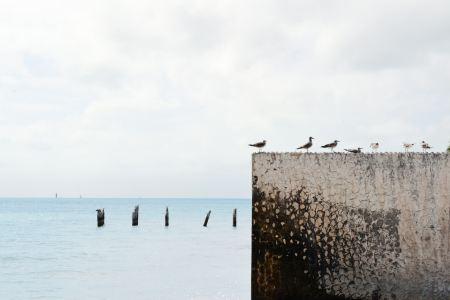 Seagulls on a wall near the sea