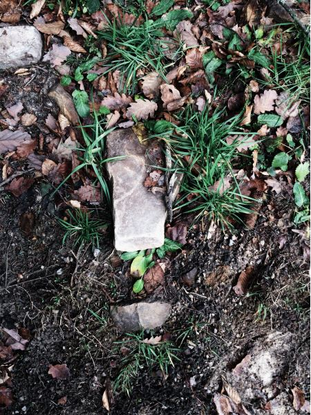 Stones, fallen leaves and green grass on the ground
