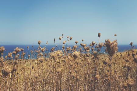 Dry vegetation near the sea