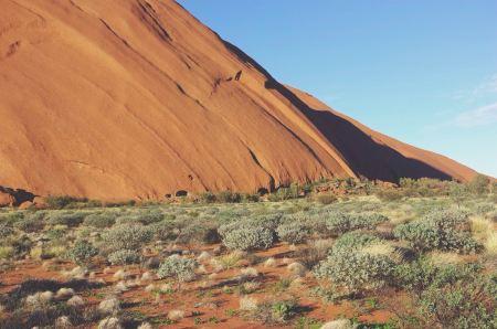 Desert vegetation near red rock