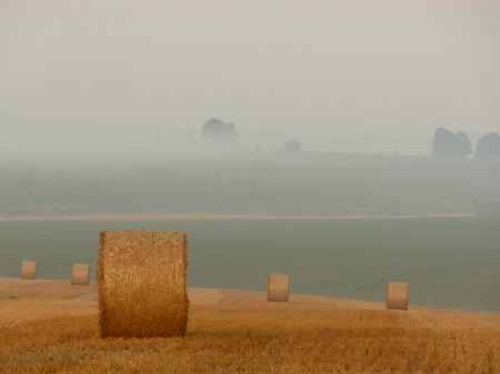 Bales of wheat