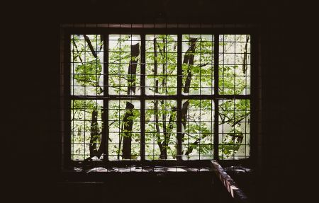 Trees seen through a window with bars