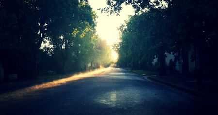 Sunlight on a street with trees