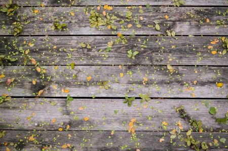 Green and yellow leaves on wood