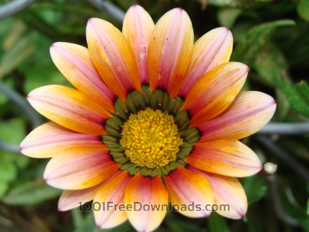 Orangish flower