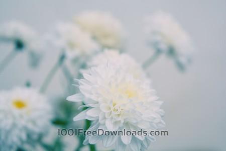 Defocused white flowers
