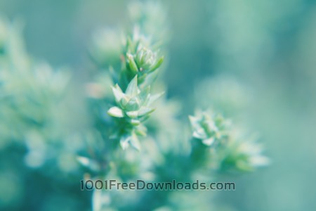 Blurred green plant