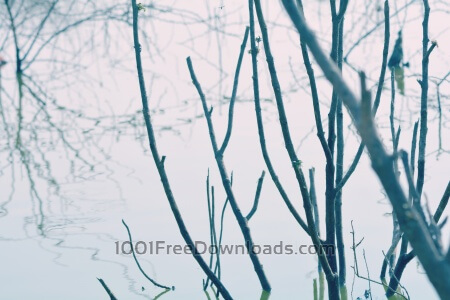 Branches in river