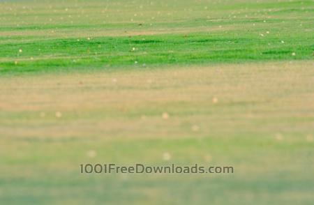 Green Grass Blur