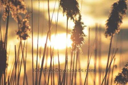 Close-up reeds