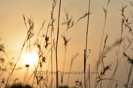 Sun reflection throught dry grass