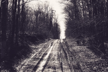 Road throught woods