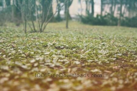 Forest close up grass