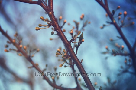 Spring branches