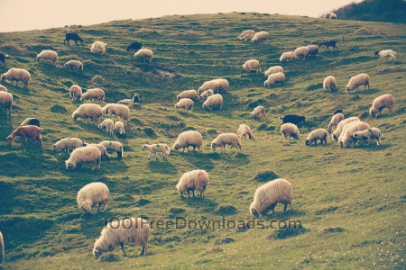 Rural landscape with sheeps on the hill