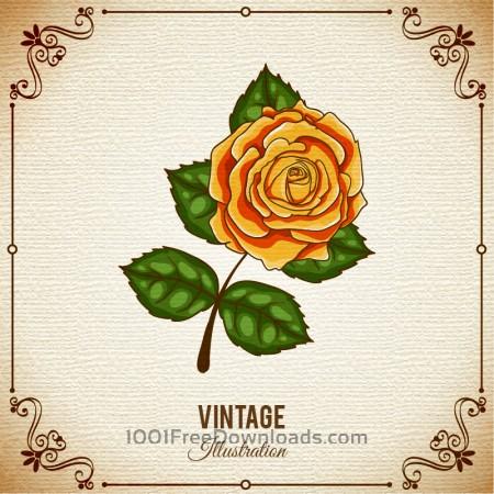 Vintage flower illustration with frame