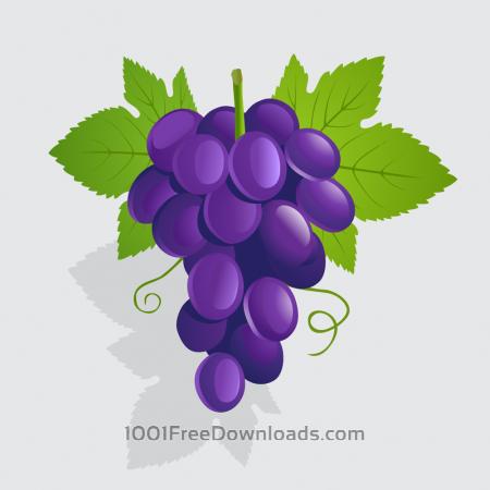Free Vector illustration Grapes