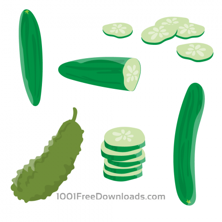Fresh Cucumber Vector