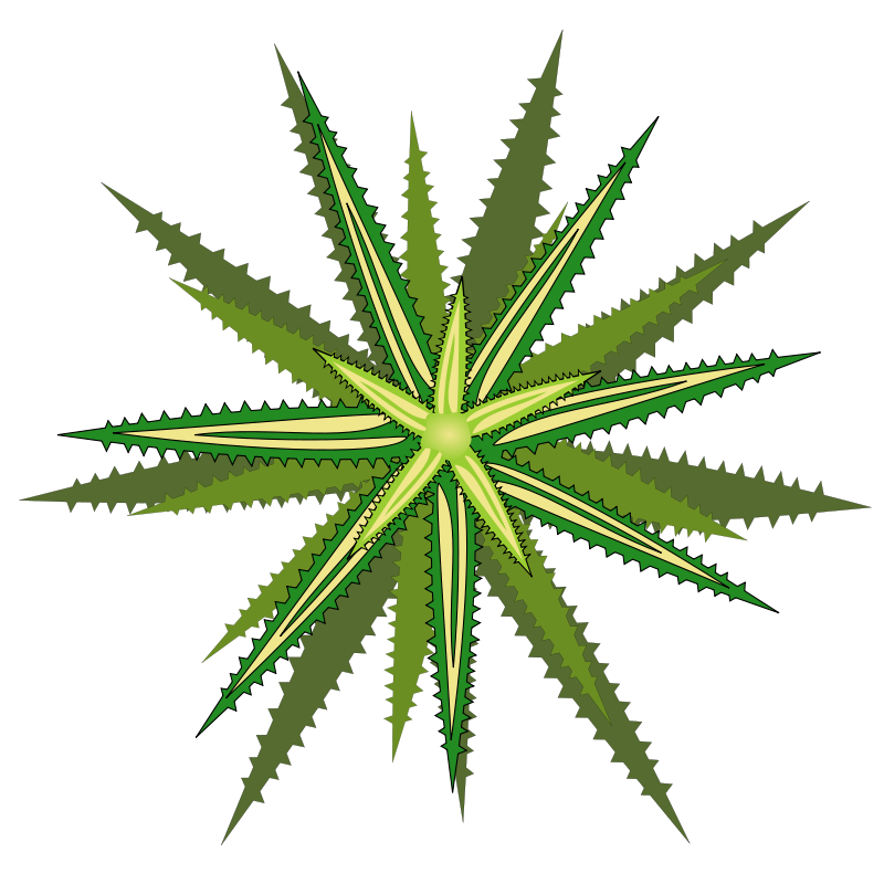 Flower Plant Top View Png