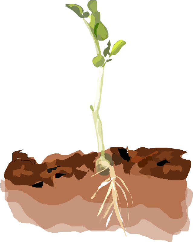 how to stop tree roots from sprouting