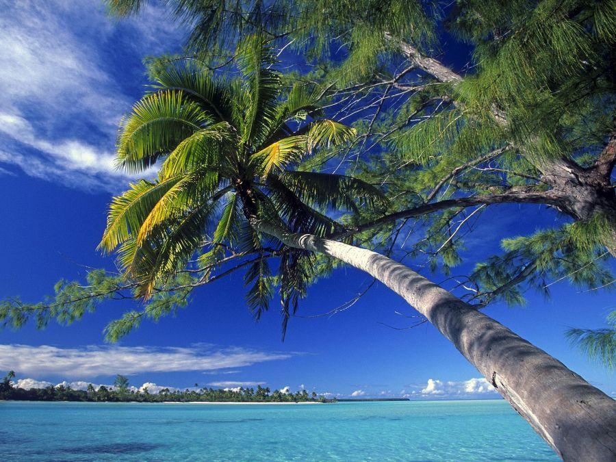 Island Beach Palm Tree Palm Tree at Society Island